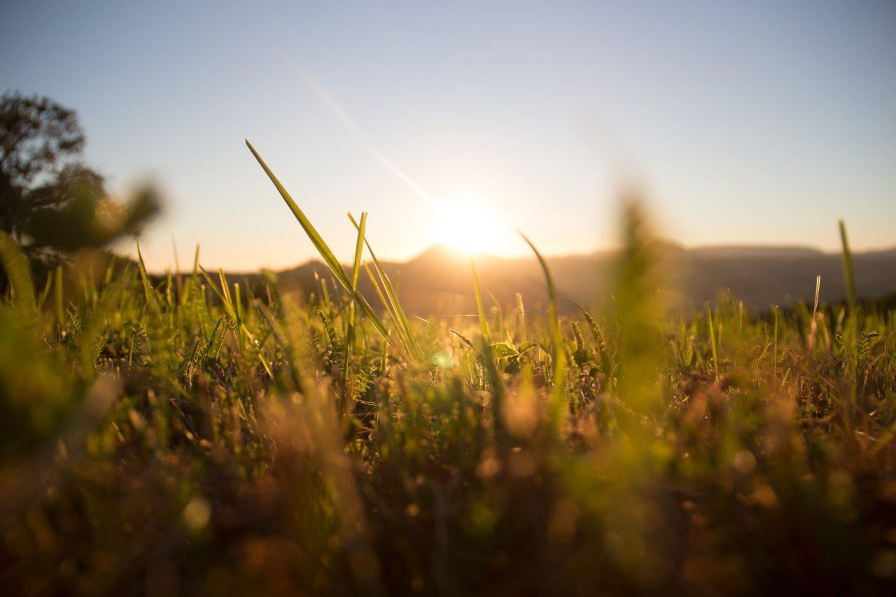 grass-1668423_1920-1280x853.jpg